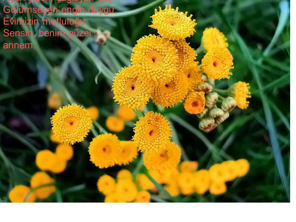 Açan çiçek, çağlayan su, Gülümseyen engin duygu, Evimizin mutluluğu Sensin, benim güzel annem.