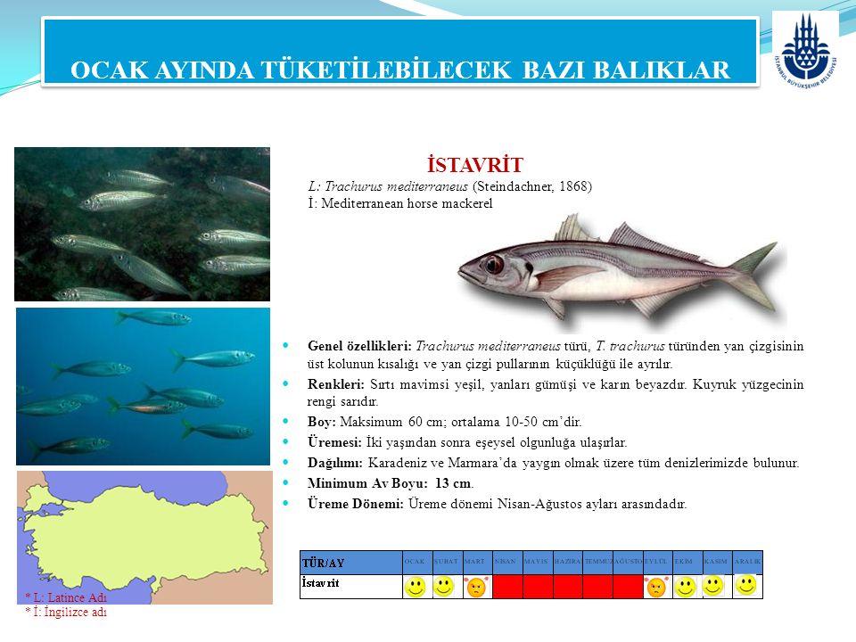 İSTAVRİT L: Trachurus mediterraneus (Steindachner, 1868) İ: Mediterranean horse mackerel OCAK AYINDA TÜKETİLEBİLECEK BAZI BALIKLAR Genel özellikleri: