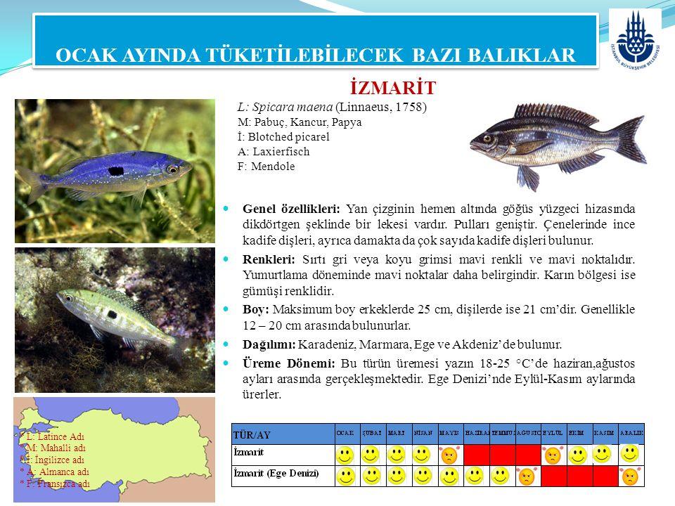 İZMARİT L: Spicara maena (Linnaeus, 1758) M: Pabuç, Kancur, Papya İ: Blotched picarel A: Laxierfisch F: Mendole OCAK AYINDA TÜKETİLEBİLECEK BAZI BALIK