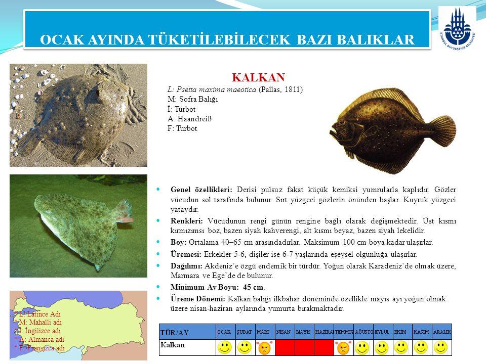 KALKAN L: Psetta maxima maeotica (Pallas, 1811) M: Sofra Balığı İ: Turbot A: Haandreiß F: Turbot OCAK AYINDA TÜKETİLEBİLECEK BAZI BALIKLAR Genel özell