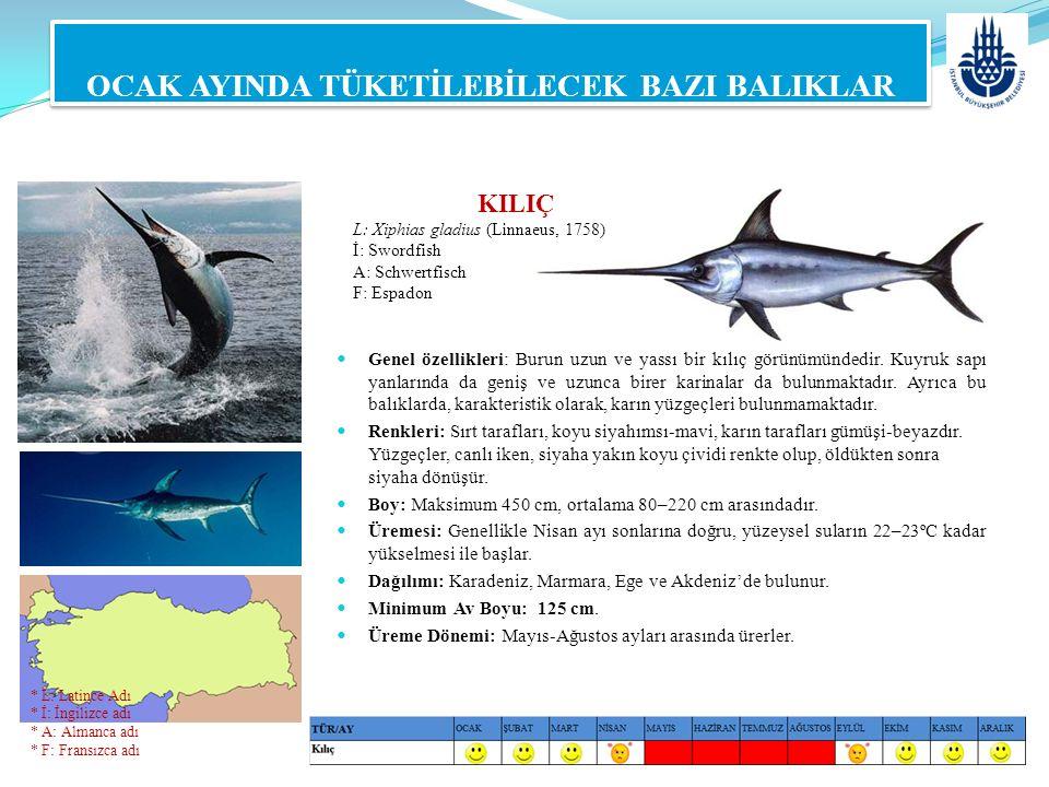 KILIÇ L: Xiphias gladius (Linnaeus, 1758) İ: Swordfish A: Schwertfisch F: Espadon OCAK AYINDA TÜKETİLEBİLECEK BAZI BALIKLAR Genel özellikleri: Burun u