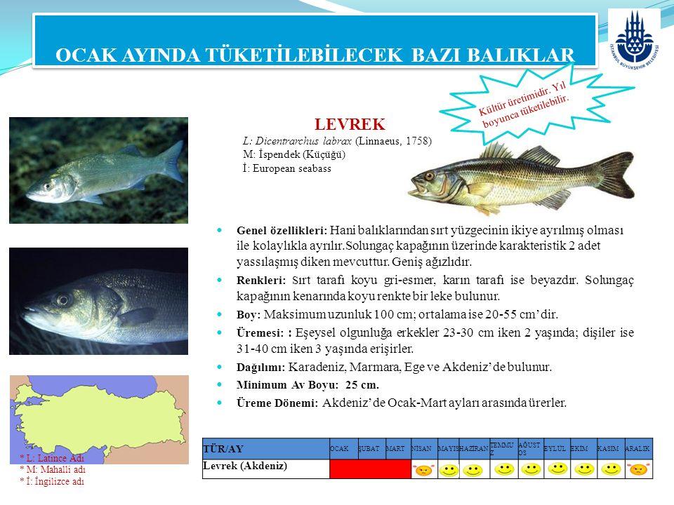 LEVREK L: Dicentrarchus labrax (Linnaeus, 1758) M: İspendek (Küçüğü) İ: European seabass OCAK AYINDA TÜKETİLEBİLECEK BAZI BALIKLAR Genel özellikleri: