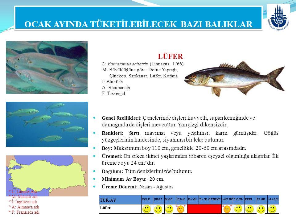 LÜFER L: Pomatomus saltatrix (Linnaeus, 1766) M: Büyüklüğüne göre: Defne Yaprağı, Çinekop, Sarıkanat, Lüfer, Kofana İ: Bluefish A: Blaubarsch F: Tasse