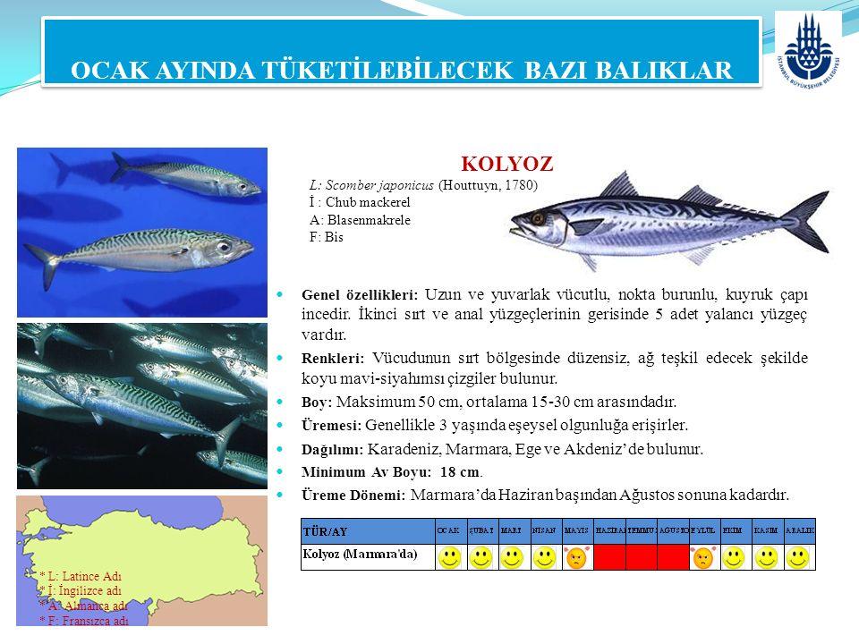 KOLYOZ L: Scomber japonicus (Houttuyn, 1780) İ : Chub mackerel A: Blasenmakrele F: Bis OCAK AYINDA TÜKETİLEBİLECEK BAZI BALIKLAR Genel özellikleri: Uz