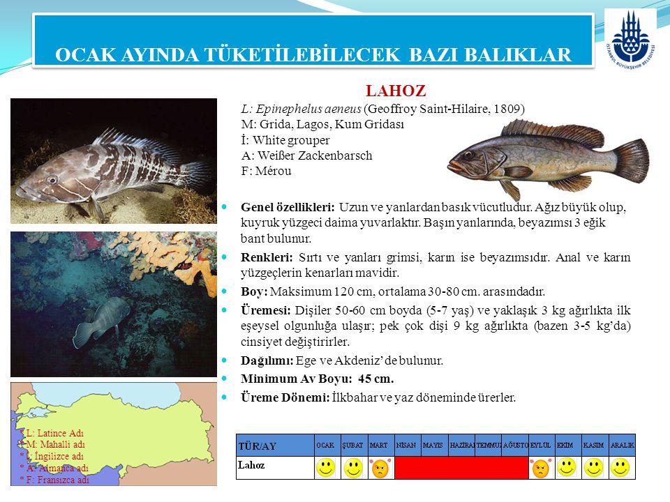 LAHOZ L: Epinephelus aeneus (Geoffroy Saint-Hilaire, 1809) M: Grida, Lagos, Kum Gridası İ: White grouper A: Weißer Zackenbarsch F: Mérou OCAK AYINDA T