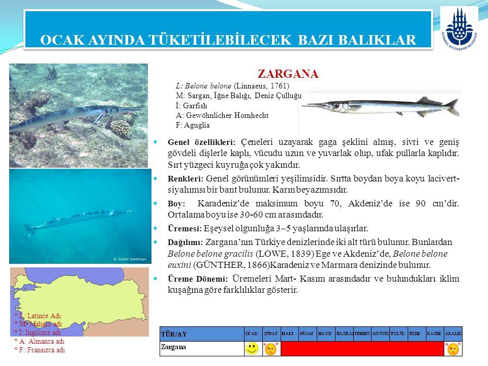 ZARGANA L: Belone belone (Linnaeus, 1761) M: Sargan, İğne Balığı, Deniz Çulluğu İ: Garfish A: Gewöhnlicher Hornhecht F: Aguglia OCAK AYINDA TÜKETİLEBİ