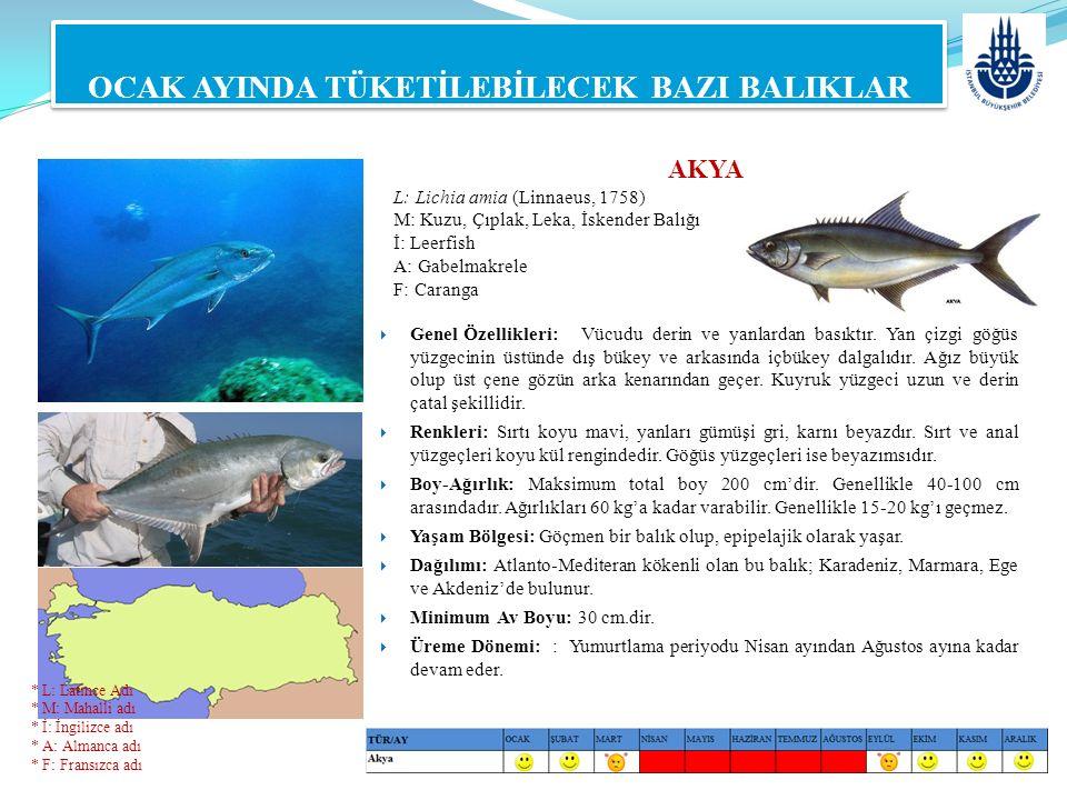 OCAK AYINDA TÜKETİLEBİLECEK BAZI BALIKLAR AKYA L: Lichia amia (Linnaeus, 1758) M: Kuzu, Çıplak, Leka, İskender Balığı İ: Leerfish A: Gabelmakrele F: C