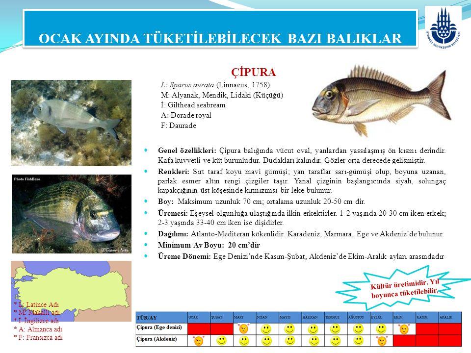 OCAK AYINDA TÜKETİLEBİLECEK BAZI BALIKLAR Genel özellikleri: Çipura balığında vücut oval, yanlardan yassılaşmış ön kısmı derindir. Kafa kuvvetli ve kü