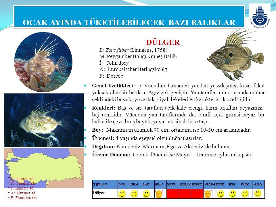 DÜLGER L: Zeus faber (Linnaeus, 1758) M: Peygamber Balığı, Güneş Balığı İ: John dory A: Europaischer Heringskönig F: Dorede OCAK AYINDA TÜKETİLEBİLECE