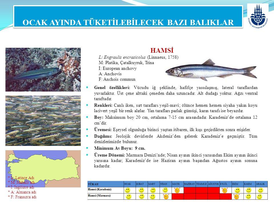 HAMSİ L: Engraulis encrasicolus (Linnaeus, 1758) M: Platika, Çatalkuyruk, Trina İ: European anchovy A: Anchovis F: Anchois commun OCAK AYINDA TÜKETİLE