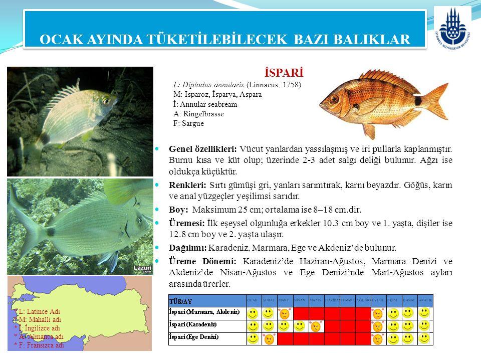 LAHOZ L: Epinephelus aeneus (Geoffroy Saint-Hilaire, 1809) M: Grida, Lagos, Kum Gridası İ: White grouper A: Weißer Zackenbarsch F: Mérou OCAK AYINDA TÜKETİLEBİLECEK BAZI BALIKLAR Genel özellikleri: Uzun ve yanlardan basık vücutludur.