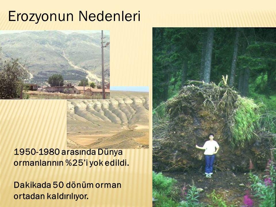 Erozyonun Nedenleri 1950-1980 arasında Dünya ormanlarının %25'i yok edildi.