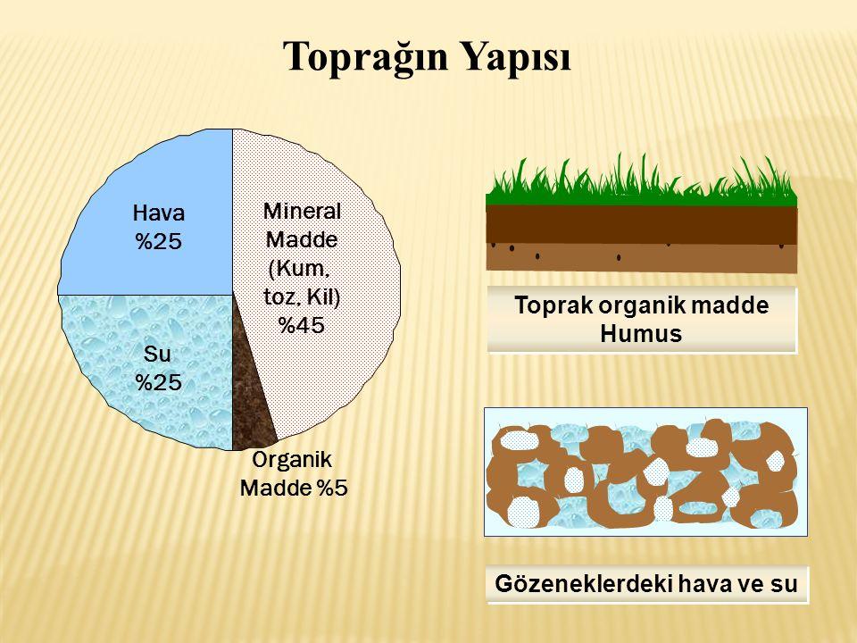Mineral Madde (Kum, toz, Kil) %45 Hava %25 Su %25 Organik Madde %5 Gözeneklerdeki hava ve su Toprak organik madde Humus Toprak organik madde Humus Toprağın Yapısı