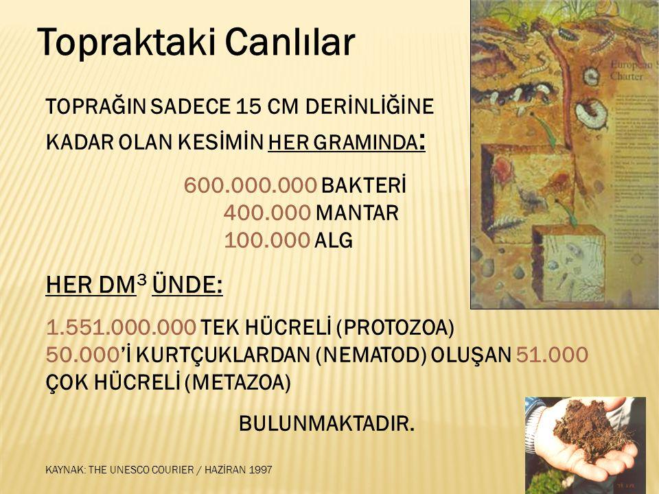 Türkiye Erozyon Haritası % 7 Hafif% 20 Orta % 63 Şiddetli ve Çok Şiddetli