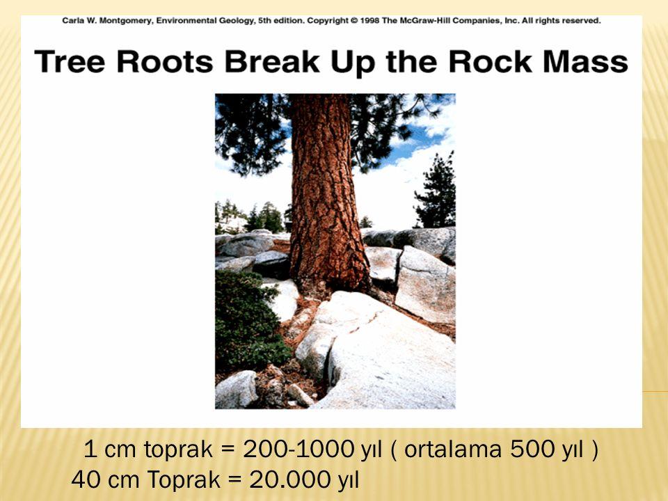 1 cm toprak = 200-1000 yıl ( ortalama 500 yıl ) 40 cm Toprak = 20.000 yıl