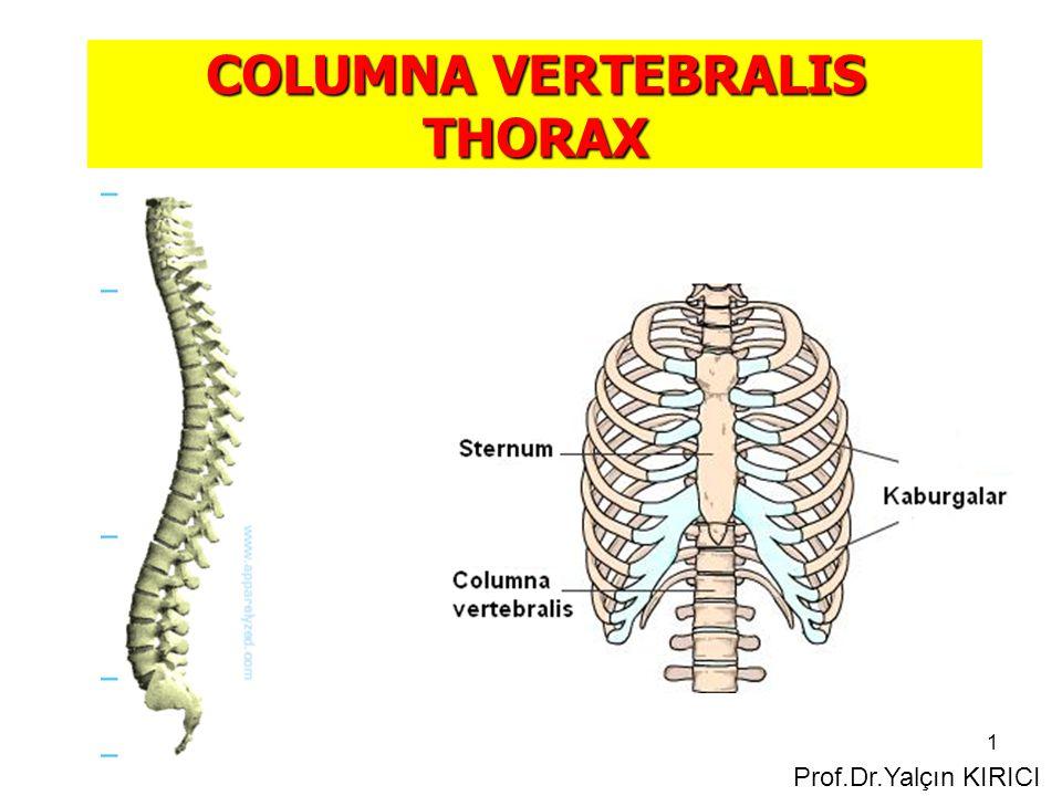 1 COLUMNA VERTEBRALIS THORAX Prof.Dr.Yalçın KIRICI