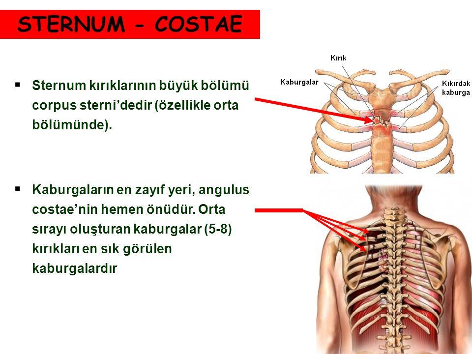 STERNUM - COSTAE  Sternum kırıklarının büyük bölümü corpus sterni'dedir (özellikle orta bölümünde).  Kaburgaların en zayıf yeri, angulus costae'nin