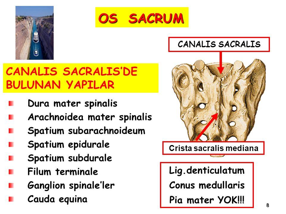 8 Dura mater spinalis Arachnoidea mater spinalis Spatium subarachnoideum Spatium epidurale Spatium subdurale Filum terminale Ganglion spinale'ler Caud