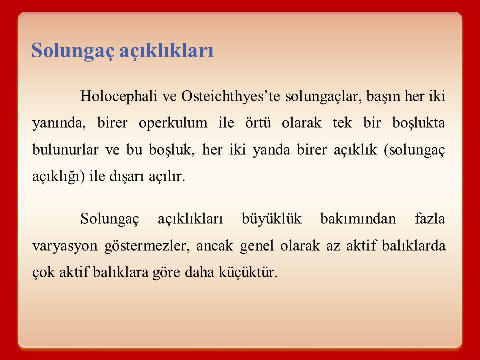Holocephali ve Osteichthyes'te solungaçlar, başın her iki yanında, birer operkulum ile örtü olarak tek bir boşlukta bulunurlar ve bu boşluk, her iki y