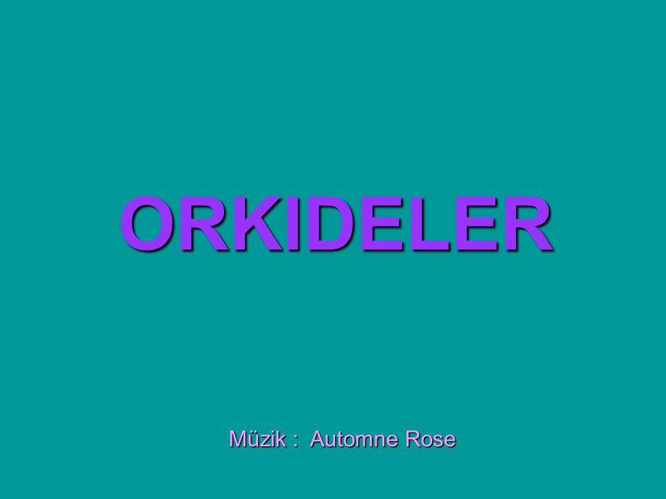 ORKIDELER Müzik : Automne Rose
