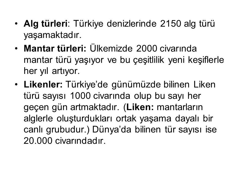 Alg türleri: Türkiye denizlerinde 2150 alg türü yaşamaktadır. Mantar türleri: Ülkemizde 2000 civarında mantar türü yaşıyor ve bu çeşitlilik yeni keşif