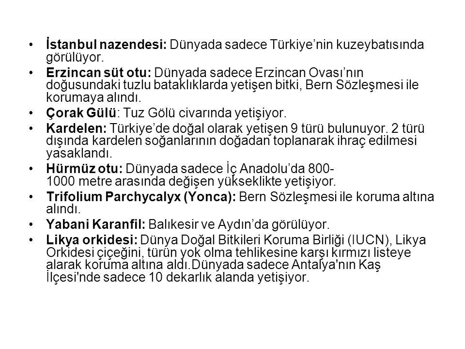 İstanbul nazendesi: Dünyada sadece Türkiye'nin kuzeybatısında görülüyor. Erzincan süt otu: Dünyada sadece Erzincan Ovası'nın doğusundaki tuzlu bataklı
