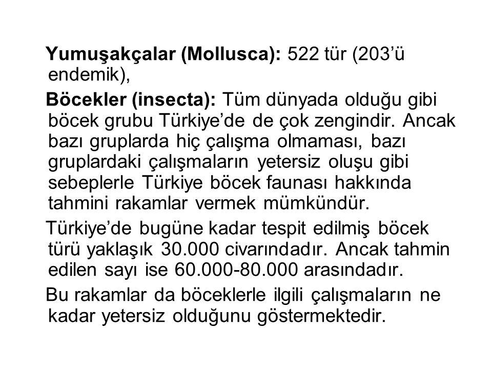 Yumuşakçalar (Mollusca): 522 tür (203'ü endemik), Böcekler (insecta): Tüm dünyada olduğu gibi böcek grubu Türkiye'de de çok zengindir. Ancak bazı grup