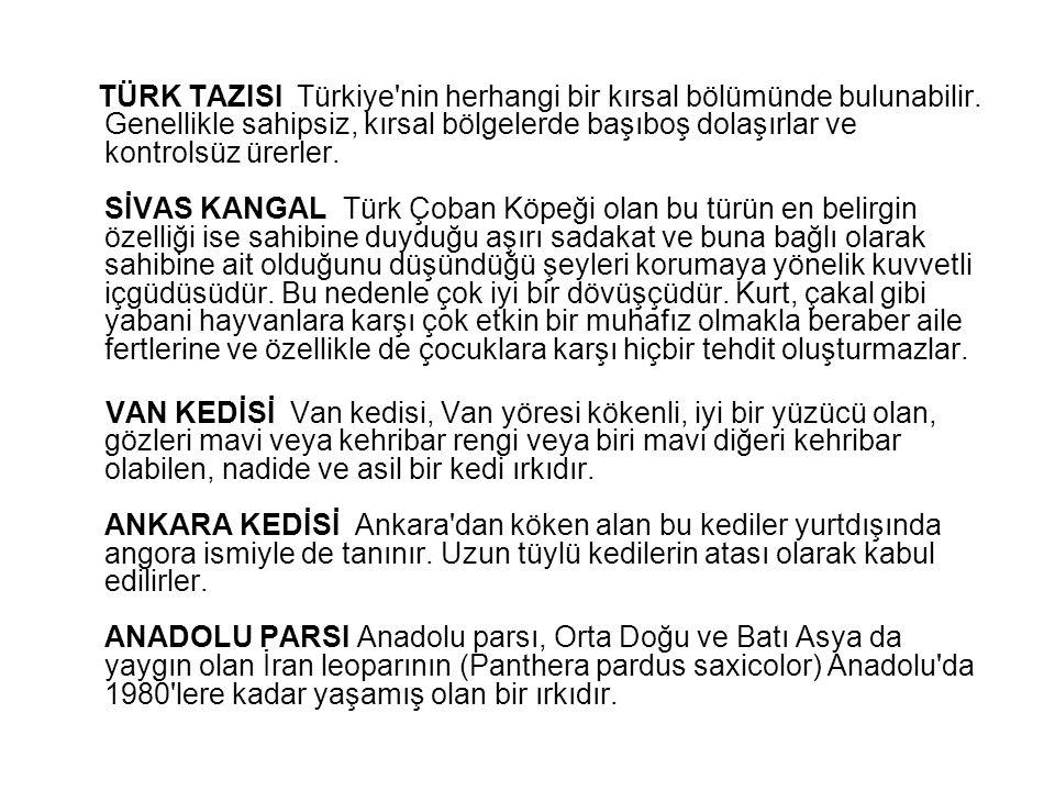 TÜRK TAZISI Türkiye'nin herhangi bir kırsal bölümünde bulunabilir. Genellikle sahipsiz, kırsal bölgelerde başıboş dolaşırlar ve kontrolsüz ürerler. Sİ