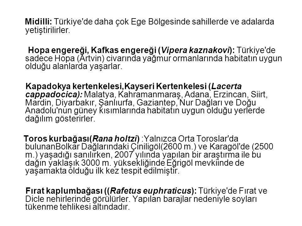 Midilli: Türkiye'de daha çok Ege Bölgesinde sahillerde ve adalarda yetiştirilirler. Hopa engereği, Kafkas engereği (Vipera kaznakovi): Türkiye'de sade