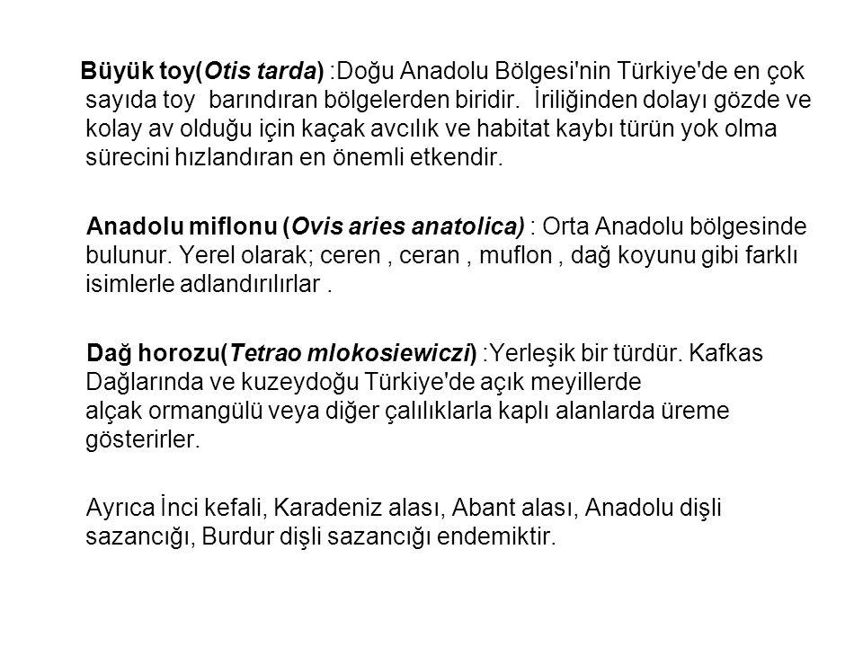 Büyük toy(Otis tarda) :Doğu Anadolu Bölgesi'nin Türkiye'de en çok sayıda toy barındıran bölgelerden biridir. İriliğinden dolayı gözde ve kolay av oldu