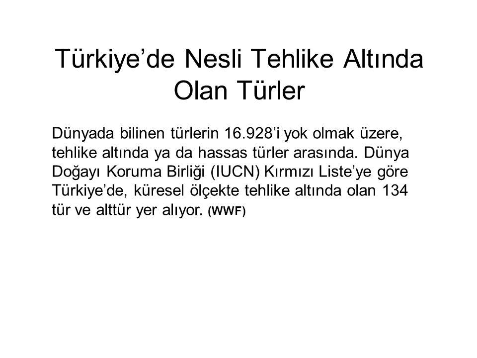 Türkiye'de Nesli Tehlike Altında Olan Türler Dünyada bilinen türlerin 16.928'i yok olmak üzere, tehlike altında ya da hassas türler arasında. Dünya Do
