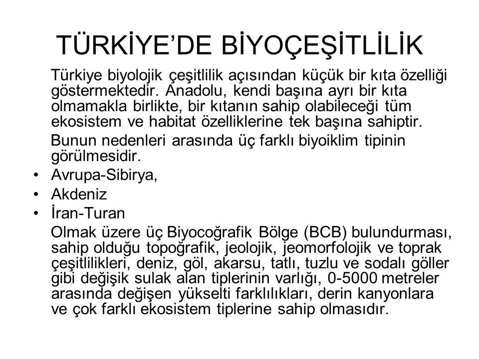 TÜRKİYE'DE BİYOÇEŞİTLİLİK Türkiye biyolojik çeşitlilik açısından küçük bir kıta özelliği göstermektedir. Anadolu, kendi başına ayrı bir kıta olmamakla