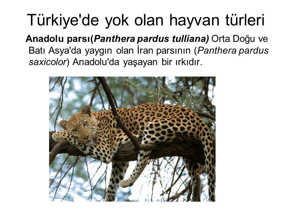 Anadolu parsı(Panthera pardus tulliana) Orta Doğu ve Batı Asya'da yaygın olan İran parsının (Panthera pardus saxicolor) Anadolu'da yaşayan bir ırkıdır