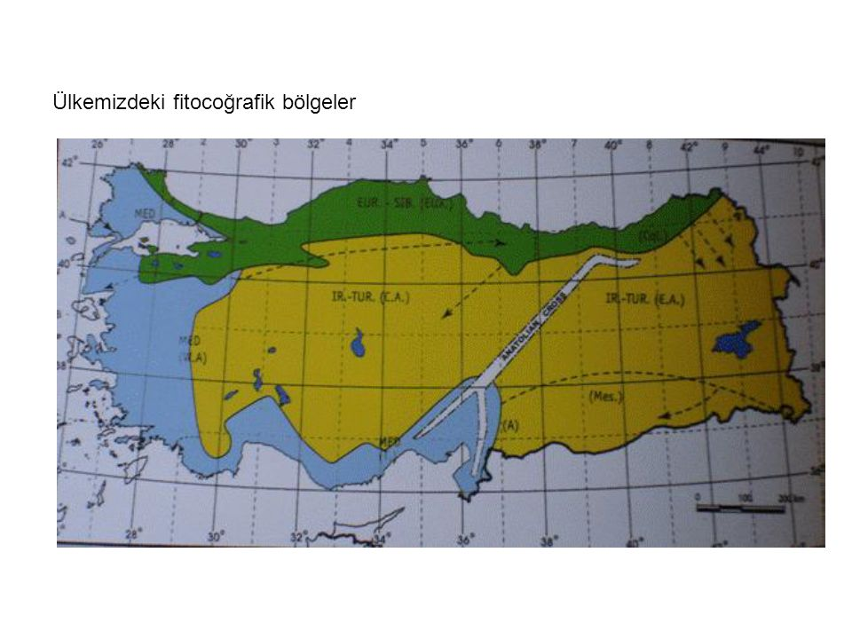 Ülkemizdeki fitocoğrafik bölgeler