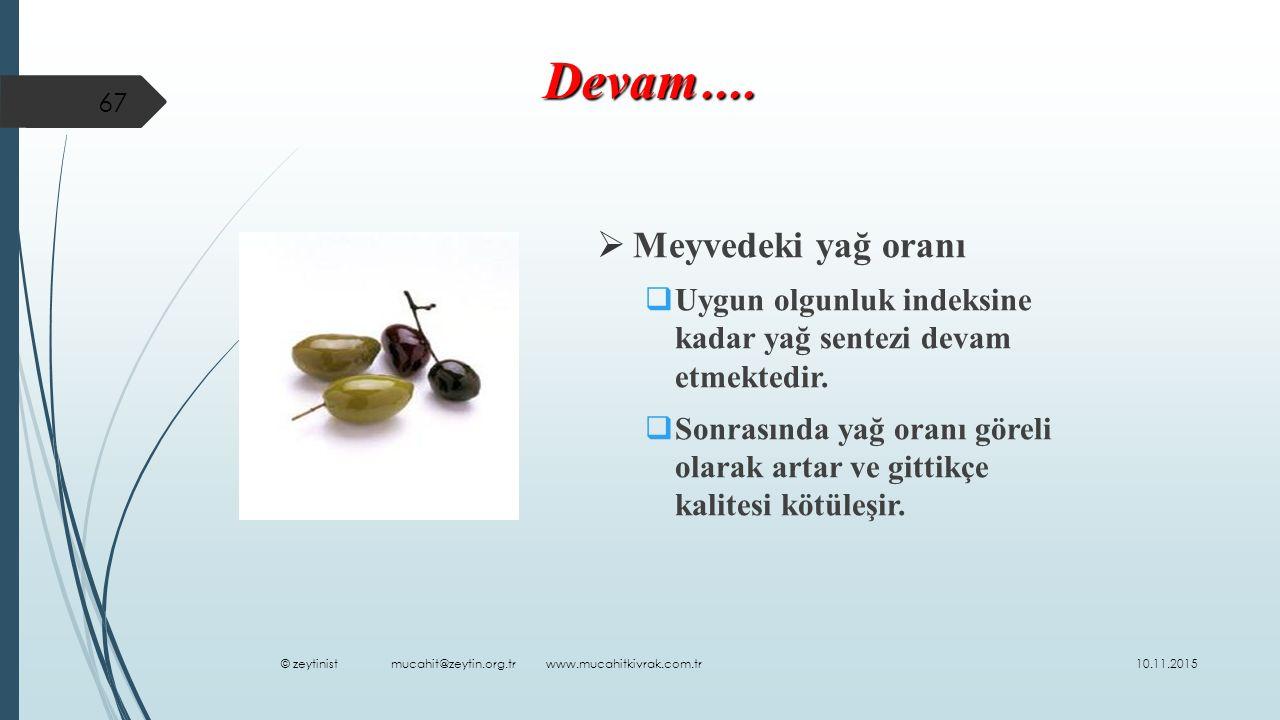  Meyvedeki yağ oranı  Uygun olgunluk indeksine kadar yağ sentezi devam etmektedir.