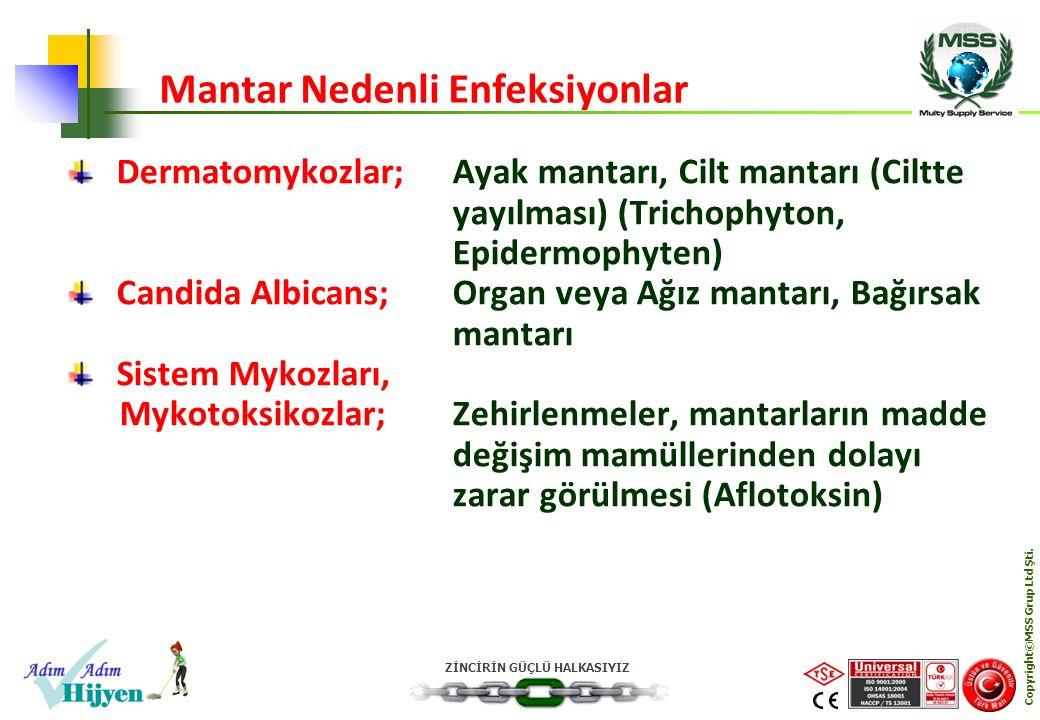 ZİNCİRİN GÜÇLÜ HALKASIYIZ Copyright©MSS Grup Ltd Şti. Dermatomykozlar;Ayak mantarı, Cilt mantarı (Ciltte yayılması) (Trichophyton, Epidermophyten) Can