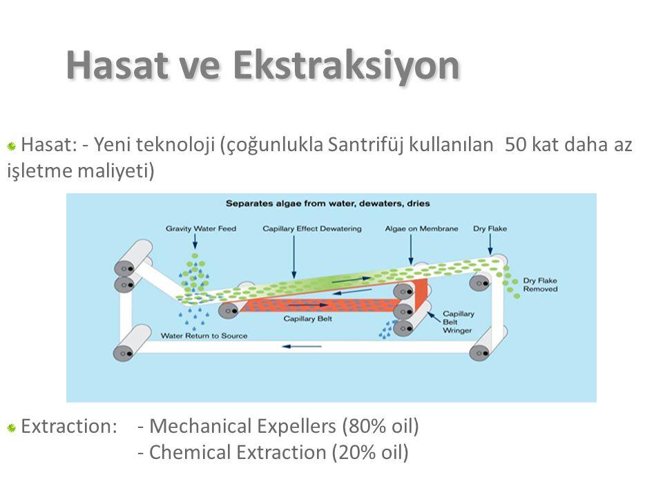 Hasat ve Ekstraksiyon Hasat: - Yeni teknoloji (çoğunlukla Santrifüj kullanılan 50 kat daha az işletme maliyeti) Extraction: - Mechanical Expellers (80