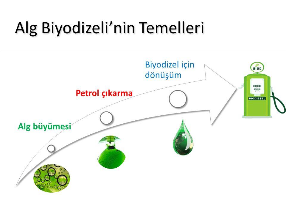 Alg büyümesi Petrol çıkarma Biyodizel için dönüşüm Alg Biyodizeli'nin Temelleri