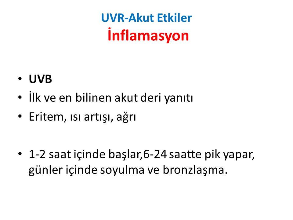 UVR-Akut Etkiler İnflamasyon UVB İlk ve en bilinen akut deri yanıtı Eritem, ısı artışı, ağrı 1-2 saat içinde başlar,6-24 saatte pik yapar, günler içinde soyulma ve bronzlaşma.