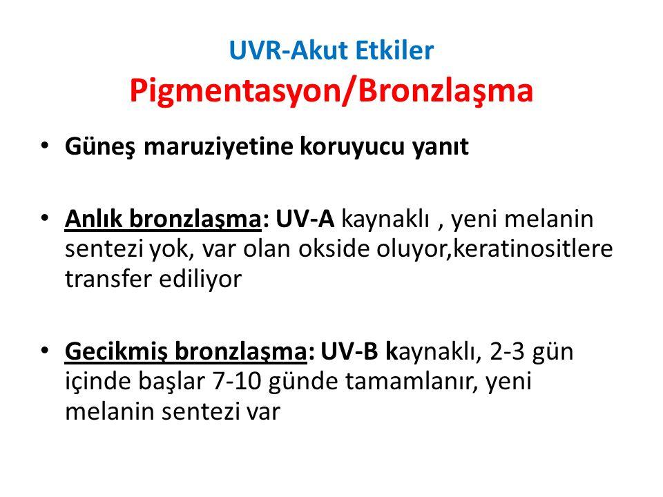 UVR-Akut Etkiler Pigmentasyon/Bronzlaşma Güneş maruziyetine koruyucu yanıt Anlık bronzlaşma: UV-A kaynaklı, yeni melanin sentezi yok, var olan okside