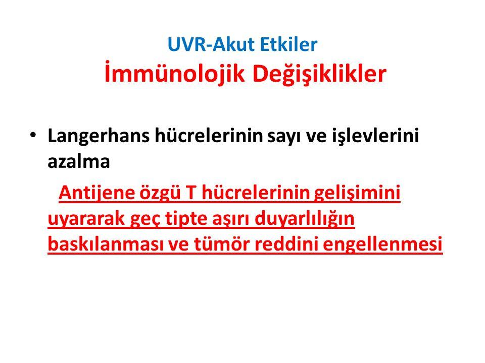UVR-Akut Etkiler İmmünolojik Değişiklikler Langerhans hücrelerinin sayı ve işlevlerini azalma Antijene özgü T hücrelerinin gelişimini uyararak geç tipte aşırı duyarlılığın baskılanması ve tümör reddini engellenmesi