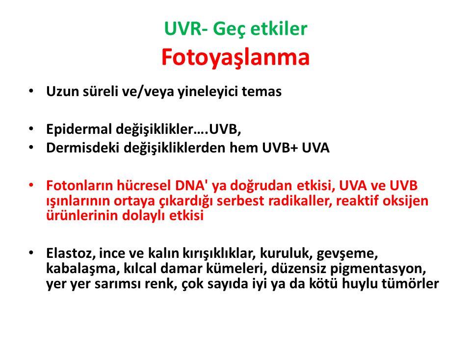 UVR- Geç etkiler Fotoyaşlanma Uzun süreli ve/veya yineleyici temas Epidermal değişiklikler….UVB, Dermisdeki değişikliklerden hem UVB+ UVA Fotonların hücresel DNA ya doğrudan etkisi, UVA ve UVB ışınlarının ortaya çıkardığı serbest radikaller, reaktif oksijen ürünlerinin dolaylı etkisi Elastoz, ince ve kalın kırışıklıklar, kuruluk, gevşeme, kabalaşma, kılcal damar kümeleri, düzensiz pigmentasyon, yer yer sarımsı renk, çok sayıda iyi ya da kötü huylu tümörler