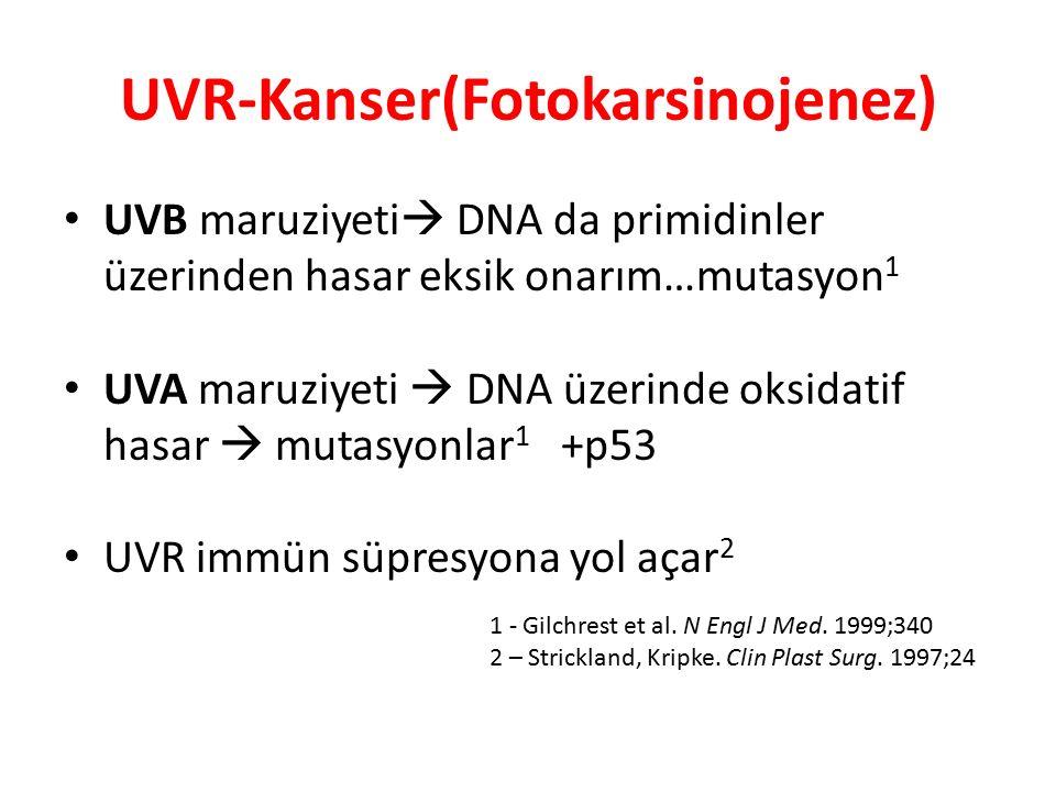 UVR-Kanser(Fotokarsinojenez) UVB maruziyeti  DNA da primidinler üzerinden hasar eksik onarım…mutasyon 1 UVA maruziyeti  DNA üzerinde oksidatif hasar