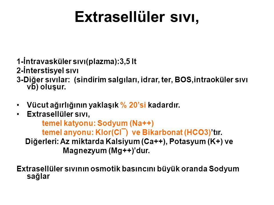 Extrasellüler sıvı, 1-İntravasküler sıvı(plazma):3,5 lt 2-İnterstisyel sıvı 3-Diğer sıvılar: (sindirim salgıları, idrar, ter, BOS,intraoküler sıvı vb)