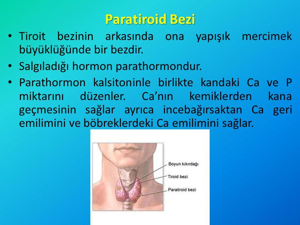 Paratiroid Bezi Tiroit bezinin arkasında ona yapışık mercimek büyüklüğünde bir bezdir. Salgıladığı hormon parathormondur. Parathormon kalsitoninle bir