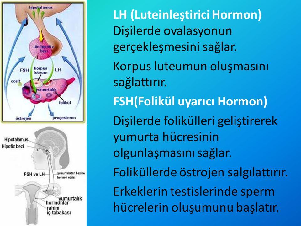 LH (Luteinleştirici Hormon) Dişilerde ovalasyonun gerçekleşmesini sağlar. Korpus luteumun oluşmasını sağlattırır. FSH(Folikül uyarıcı Hormon) Dişilerd