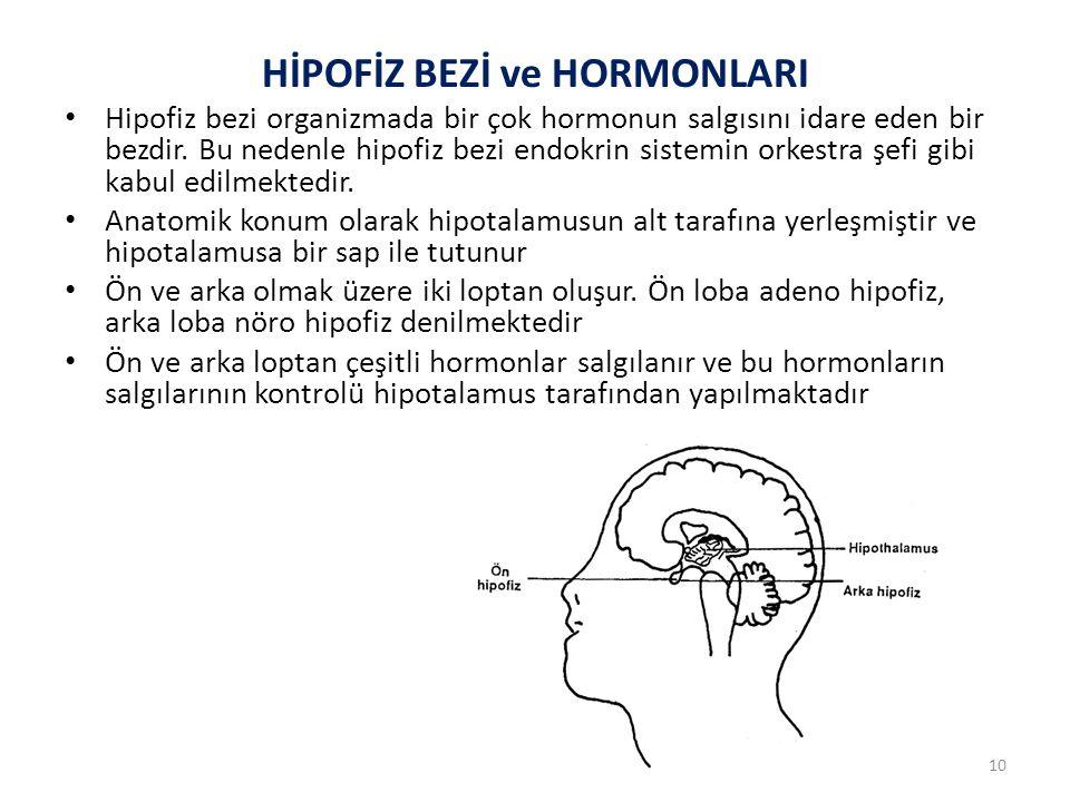 Hipotalamus, ön lob hormonlarının salgısını, bu hormonların her biri için salınmalarına izin verici veya inhibe edici etkiye sahip kimyasal aracılarla yapmaktadır.