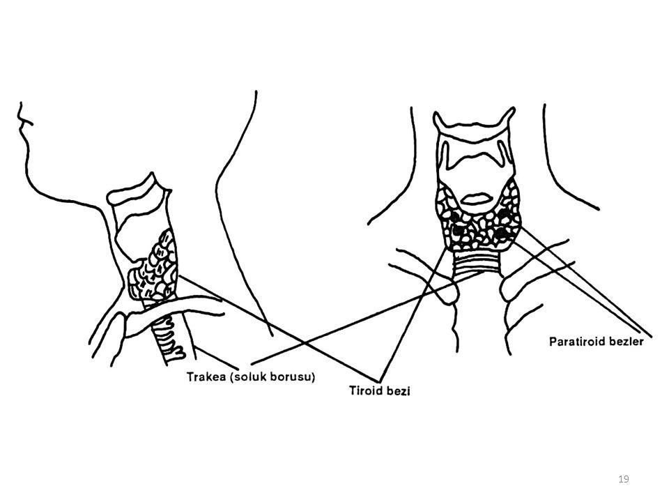 ADRENAL BEZ HORMONLARI Her iki böbreğin üst tarafında yerleşmiş olan adrenal bezler, medulla ve korteks olmak üzere iki kısımdan oluşmaktadır.