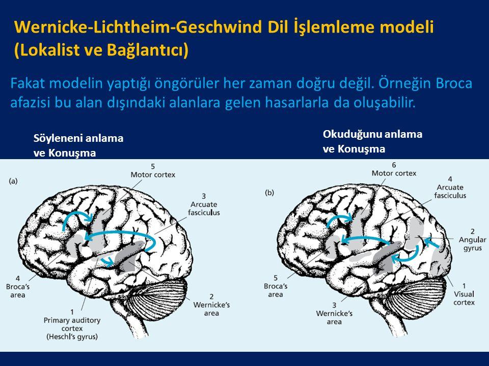 Wernicke-Lichtheim-Geschwind Dil İşlemleme modeli (Lokalist ve Bağlantıcı) Söyleneni anlama ve Konuşma Okuduğunu anlama ve Konuşma Fakat modelin yaptı