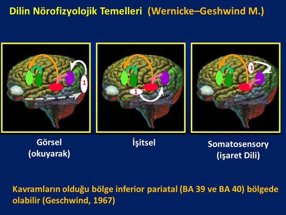 Dilin Nörofizyolojik Temelleri (Wernicke–Geshwind M.) Görsel (okuyarak) İşitsel Somatosensory (işaret Dili) 1 1 1 Kavramların olduğu bölge inferior pa